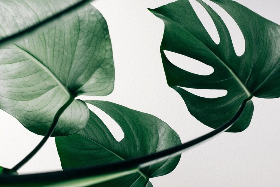 Bien au-delà de l'engagement vert