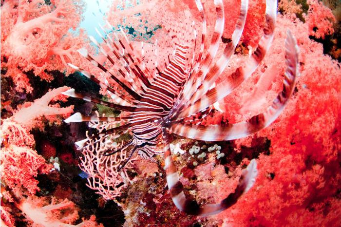 Living Coral: la couleur de l'année 2019